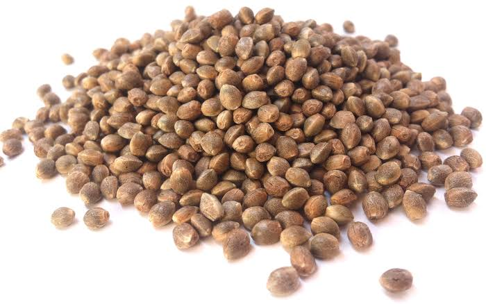 How Cannarado genetics seeds are different from other cannabis seeds